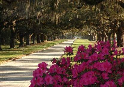 Boone Hall Plantation - The Peck Law Firm